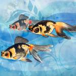 """Three Watercolor Fantail Goldfish"" by ElainePlesser"