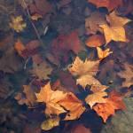 """Autumn Leaves in Pond"" by KsWorldArt"