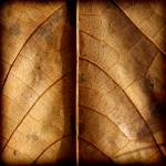"""Pawpaw Leaf Abstract"" by KsWorldArt"