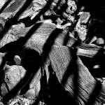 """Royal Deadwood Striped"" by robertmeyerslussier"