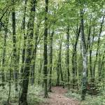 """Path Between Trees (Fageda d"