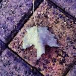 """""""Autumn Blue"""" by RCdeWinter"""