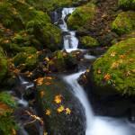 """""""Gorton Creek Autumn"""" by Dawsonimages"""