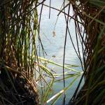 """""""Reed Window"""" by rubybgold"""