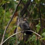 """Montana Singing Bird"" by rubybgold"