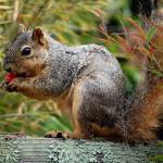 """""""Squirrel with Plum"""" by rubybgold"""