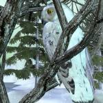 """Into The Woods Snowy Owl"" by ReneeLozenGraphics"