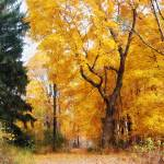 """Autumn Path"" by susansartgallery"
