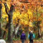 """Autumn Stroll"" by susansartgallery"
