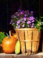 Basket of Asters With Pumpkin and Gourd