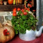 """Teapot Filled With Geraniums"" by susansartgallery"