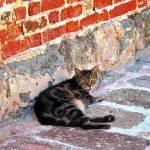 """Cat Against Stone"" by susansartgallery"
