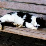 """Cat Sleeping on Bench"" by susansartgallery"