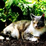 """Cat Relaxing in Garden"" by susansartgallery"