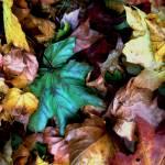 """Satin Leaves"" by RCdeWinter"