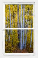 Gold Aspen Forest White Rustic Window View