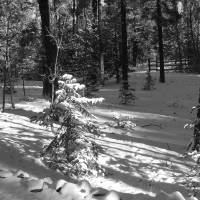 Morning Sun on Newly Fallen Snow P1160428 Art Prints & Posters by Jacque Alameddine