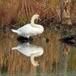 Reflection on Golden Pond