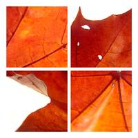 Four Meditations on a Leaf