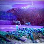 """Pacific Grove Golf Links Deer In The Moonlight"" by JoyceDickens"