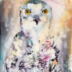"""Snow Owl Birds of Prey Watercolor by Ginette"" by GinetteCallaway"