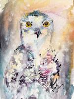 Snow Owl Birds of Prey Watercolor by Ginette