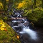 """""""Surround By Autumn"""" by Dawsonimages"""
