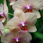 """orchid 3"" by BonVivantPhotography"
