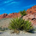 """Red Rock Canyon Desert Plains"" by photocatphoto"
