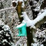 """Turquoise Birdhouse in Winter"" by susansartgallery"