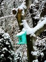 Turquoise Birdhouse in Winter