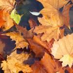 """""""Autumn Leaves"""" by KsWorldArt"""