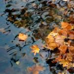 """Fall Leaves in Lake"" by KsWorldArt"