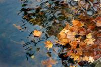 Fall Leaves in Lake