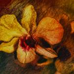 """Mood of the Orchid"" by DBenoit"