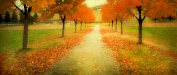 AUTUMN PATH