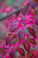 Autumns Pink And Purple