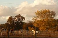 November on the Ranch