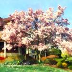 """Magnolia Near Green House"" by susansartgallery"