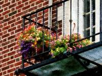 Hanging Basket on Fire Escape