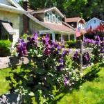 """""""Purple Clematis on Rustic Fence"""" by susansartgallery"""