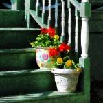 """Geraniums and Pansies on Steps"" by susansartgallery"
