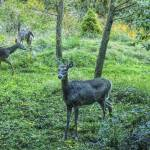 """Four Deer In The Forest"" by SoulfulPhotos"