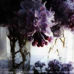 """""""Lilacs"""" by pattifriday"""