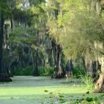 """Swamp Scenic"" by last_light"