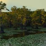 """Bayou Canoe Trail"" by last_light"