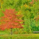 """Fall color in HDR"" by last_light"