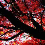 """""""Red Silouette"""" by rik"""