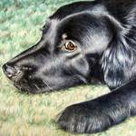 """Flat Coated Retriever"" by ArtsandDogs"