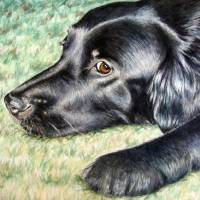 Flat Coated Retriever Art Prints & Posters by Nicole Zeug